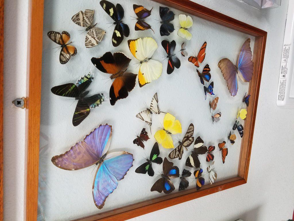bug museum
