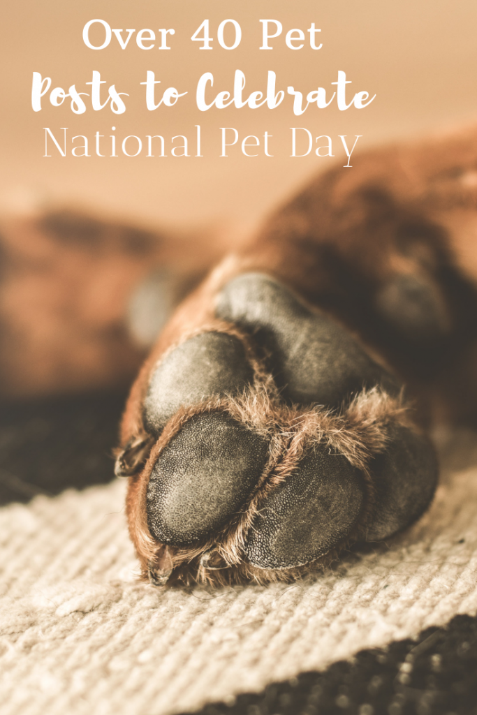 April 11 is National Pet Day, here's a post with over 40 different pet post from around the web.