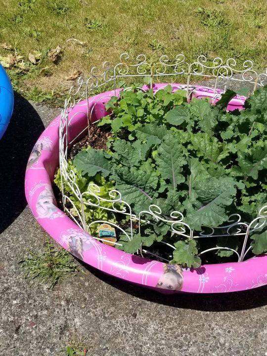 One Man's Trash is Another Man's Treasure: Kiddie Pool Garden